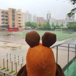 Die Maus schaut sich den Sportplatz an.