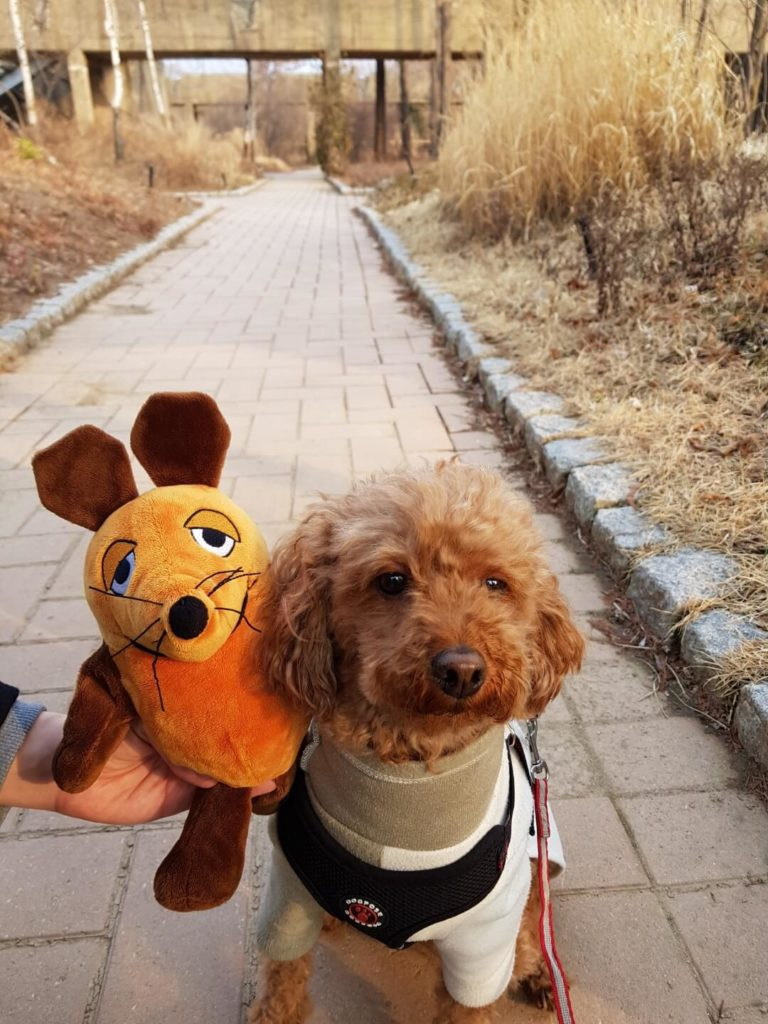 Die Maus mit einem neuen Freund
