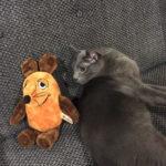 Die Maus hat keine Angst vor Katzen.