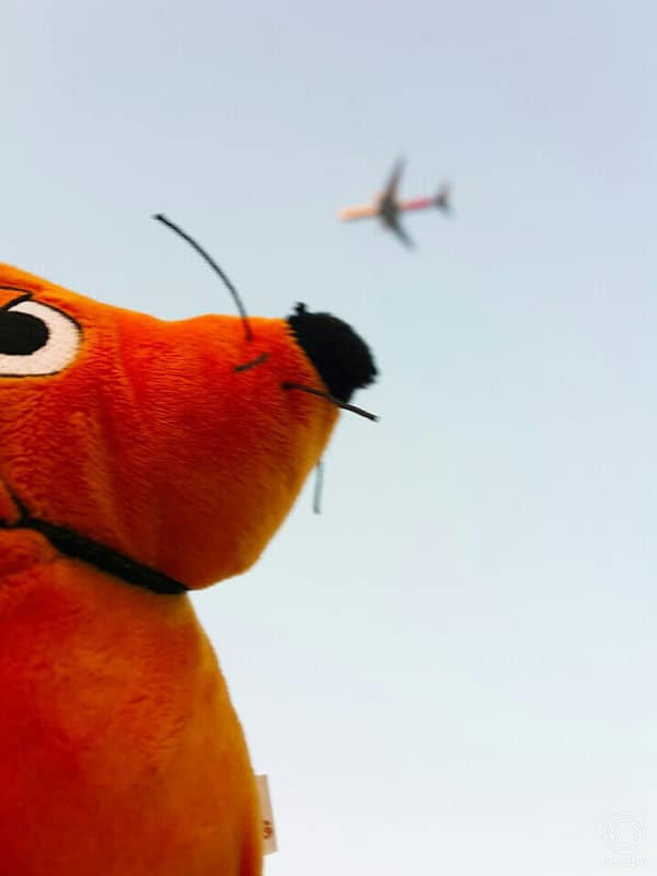 Die Maus schaut in den Himmel, wo ein Flugzeug fliegt.